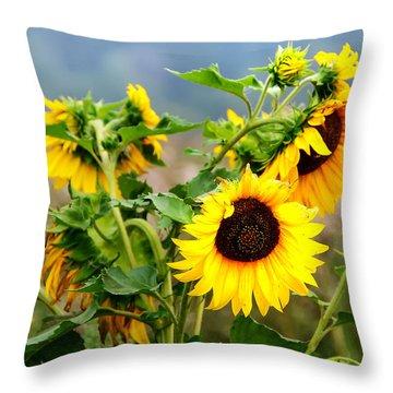 Sunny Meadow Throw Pillow by Jenny Rainbow
