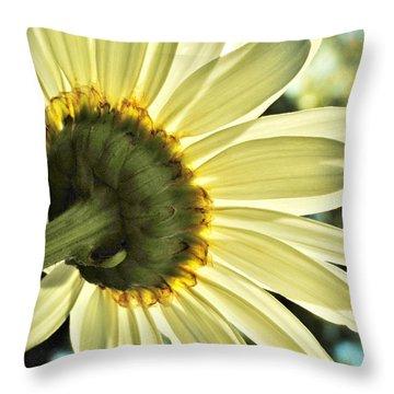 Sunny Shasta Daisy Throw Pillow by Kelly Nowak