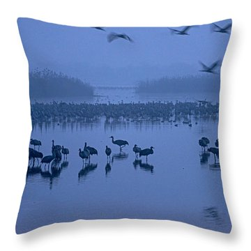 Sunrise Over The Hula Valley Israel 4 Throw Pillow by Dubi Roman