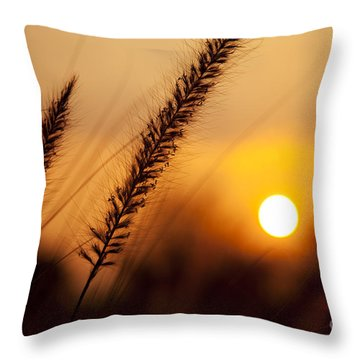 Sunset Fountain Grass Throw Pillow