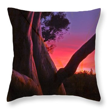 Sunset Madrone 3 Throw Pillow
