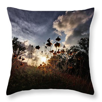 Sunset On Daisy Throw Pillow by Linda Unger