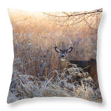 Sunshine Deer Throw Pillow
