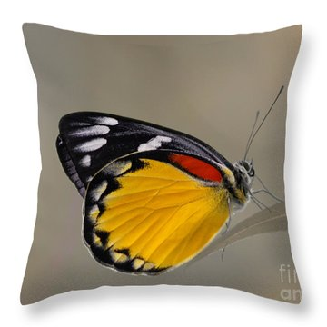 Sunshine For The Taking Throw Pillow by Nola Lee Kelsey
