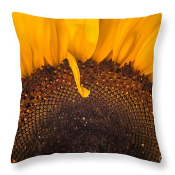 Throw Pillow featuring the photograph Sunshine by Jan Bickerton