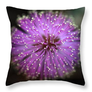 Throw Pillow featuring the photograph Sunshine Mimosa by Greg Allore