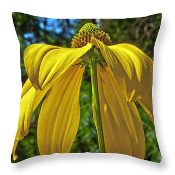 Throw Pillow featuring the photograph Sunshine On My Shoulders by Tikvah's Hope