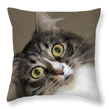 Surprise Throw Pillow by Jeannette Hunt