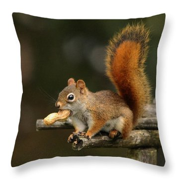 Surprised Red Squirrel With Nut Portrait Throw Pillow by Debbie Oppermann