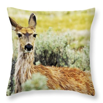 Throw Pillow featuring the photograph Surround Sound by Belinda Greb