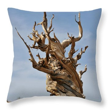 Survival Expert Bristlecone Pine Throw Pillow by Christine Till