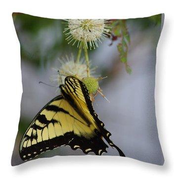 Swallowtail Butterfly 1 Throw Pillow