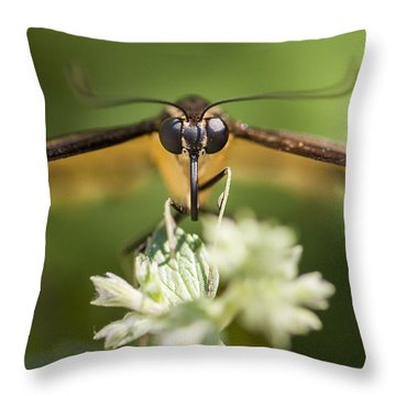 Swallowtail Butterfly Throw Pillow by Adam Romanowicz
