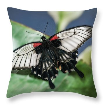 Throw Pillow featuring the digital art Swallowtail Butterfly by Mae Wertz