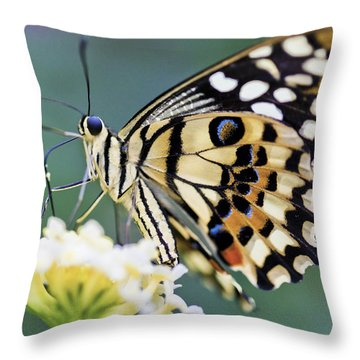 Swallowtail Butterfly Throw Pillow by Maj Seda