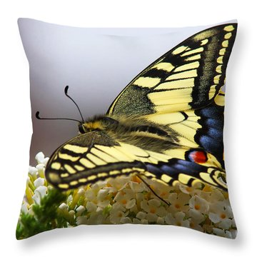 Swallowtail Butterfly Throw Pillow by Nick  Biemans