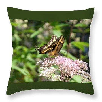 Throw Pillow featuring the photograph Swallowtail by Karen Silvestri