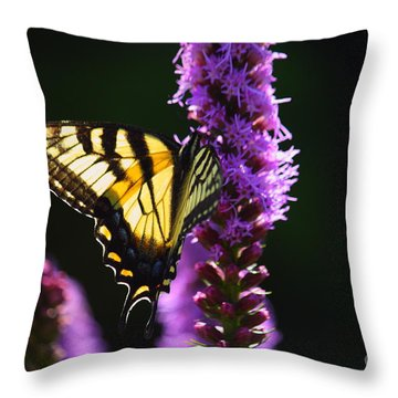 Swallowtail Tail Butterfly  Throw Pillow