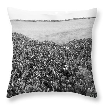 Throw Pillow featuring the photograph Swamp Hyacinths Water Lillies Black And White by Joseph Baril