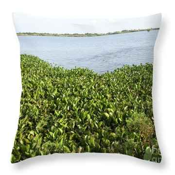 Throw Pillow featuring the photograph Swamp Hyacinths Water Lillies by Joseph Baril