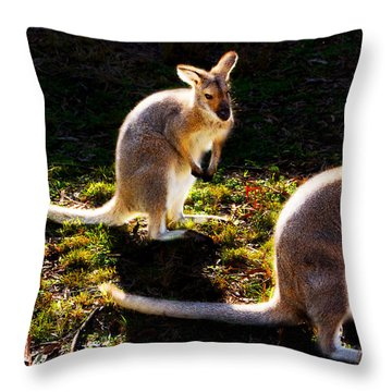 Red-necked Wallabies Throw Pillow
