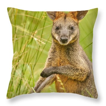 Swamp Wallaby Throw Pillow by Michael  Nau