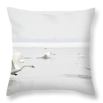 Swan Fight Throw Pillow