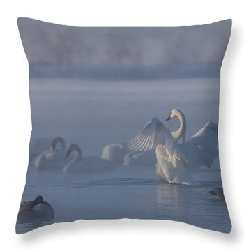 Swan Showing Off Throw Pillow by Patti Deters
