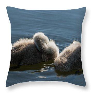 Swan Siesta Throw Pillow by Michael Mogensen