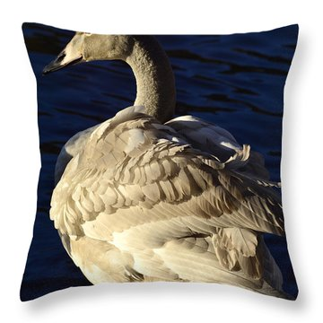 Swan Sits And Looks Out Over The Lake Throw Pillow by Tommytechno Sweden