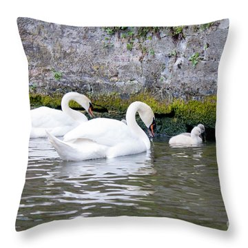 Swans And Cygnets In Brugge Canal Belgium Throw Pillow