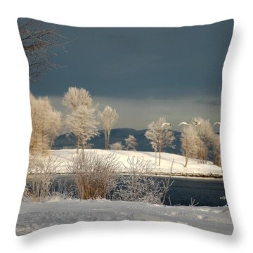 Throw Pillow featuring the photograph Swans On A Frosty Day by Randi Grace Nilsberg