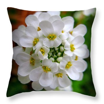 Sweet Alyssum Throw Pillow by Patti Whitten