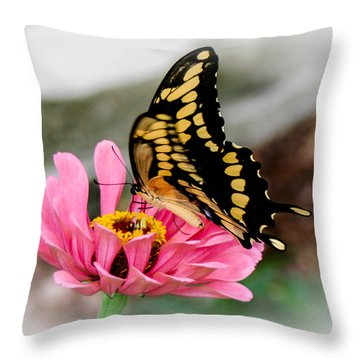 Sweet Delicacy Throw Pillow