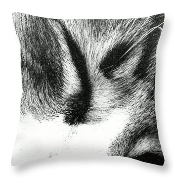 Throw Pillow featuring the photograph Sweet Dreams by Jacqueline McReynolds