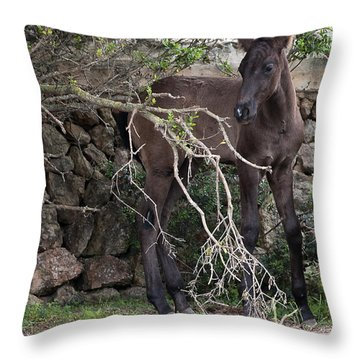 sweet heart - A tender foal wait his beloved mother  Throw Pillow by Pedro Cardona