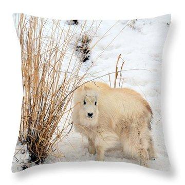 Sweet Little One Throw Pillow