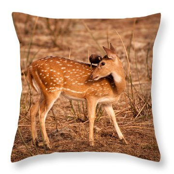 Sweet Little Secrets Throw Pillow