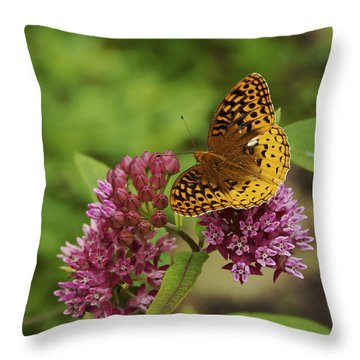 Sweet Nectar - Butterfly On Milkweed Art Print Throw Pillow by Jane Eleanor Nicholas