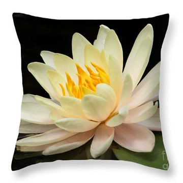 Sweet Peach Water Lily Throw Pillow by Sabrina L Ryan