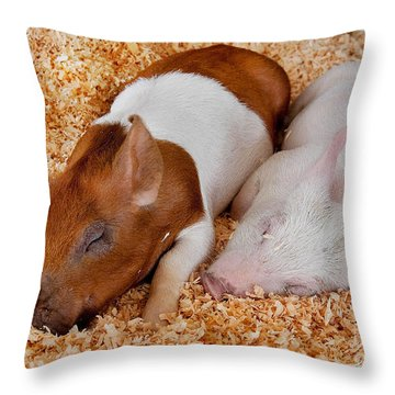 Sweet Piglets Nap Art Prints Throw Pillow by Valerie Garner