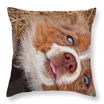 Sweet Australian Shepherd Puppy Face Art Prints Throw Pillow by Valerie Garner