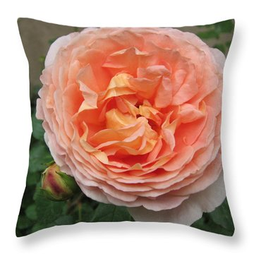 Throw Pillow featuring the photograph Sweet Rhapsody by Pema Hou