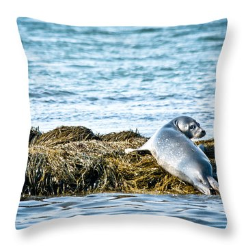 Sweet Seal Throw Pillow by Cheryl Baxter