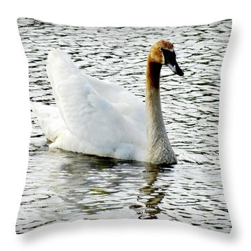 Sweet Swan Swimming Throw Pillow by Danielle  Parent