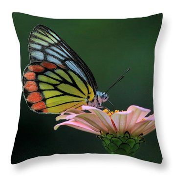 Delicate Beauty Throw Pillow by Ramabhadran Thirupattur