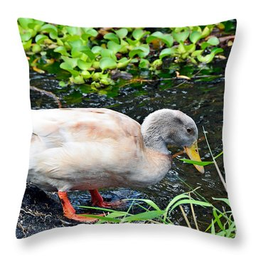 Throw Pillow featuring the photograph Swim Time by David Lawson
