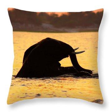 Throw Pillow featuring the photograph Swimming Kalahari Elephants by Amanda Stadther