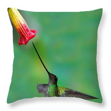 Sword-billed Hummingbird Throw Pillow by Anthony Mercieca