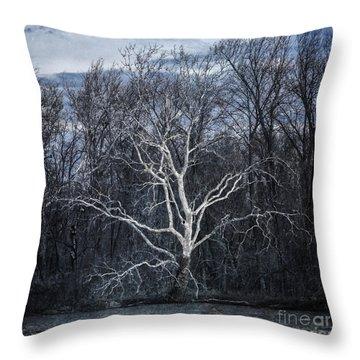 Sycamore Dreamer Throw Pillow